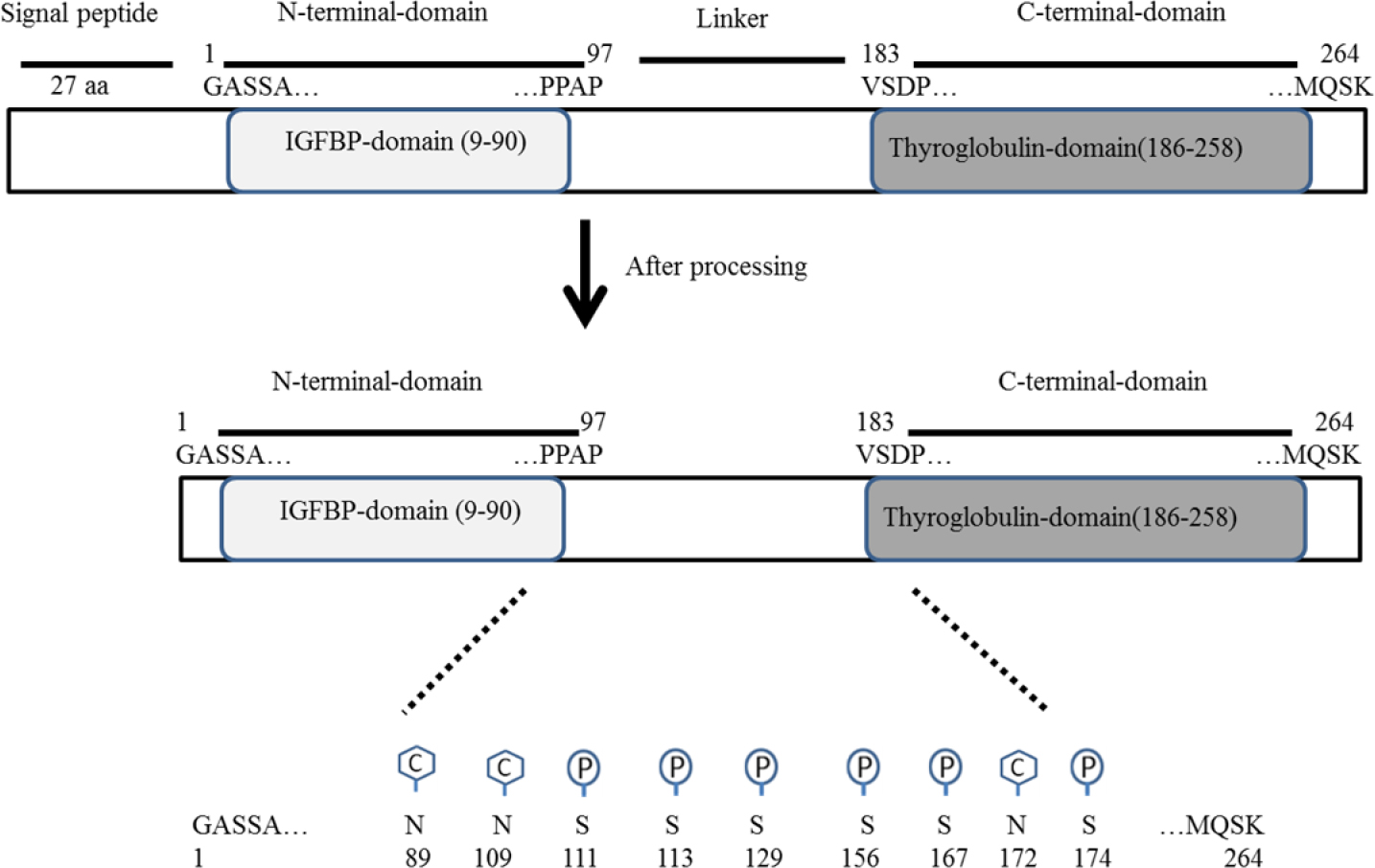 In Silico Interaction Of Insulin Like Growth Factor Binding Protein Sap 1 Circuit Diagram Figure Schematic 3 Igfbp And Its Domains Which Are Processed To Mature Form