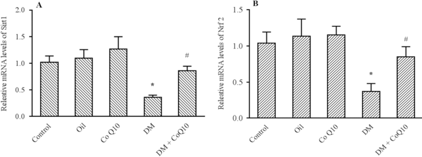 Figure 3: Comparison of (A) Sirt1 and (B) Nrf2 genes expression in liver tissues of groups of controls, diabetic, diabetic, and normal rats fed with Co Q10 (10 mg/kg BW for 6 weeks) using quantitative RT-PCR. The results were normalized against the expression of the housekeeping gene, Cyclo A. Co Q10 treatment considerably increased Sirt1 and Nrf2 genes expression compared diabetic group. * Represents a significant difference between diabetic group and control groups (<i>P</i> < 0.05) and # indicates a significant difference between diabetic rats received Co Q10 and diabetic group. Values are means ± SEM for each group. Each bar represents at least six rats. RT-PCR, Real time polymerase chain reaction; Co Q10, coenzyme Q10; DM, diabetes mellitus.